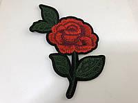 Роза 36