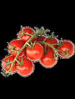 Семена Томатов пакетированные