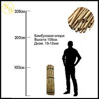 Бамбуковый ствол, опора L 1,05м диам. 10-12мм., фото 1