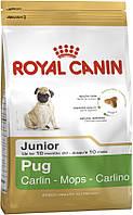 Сухой корм 500 г для щенков породы Мопс Роял Канин / PUG JUNIOR Royal Canin
