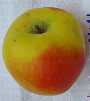 Яблоня Кальвиль Краснокутский. (54-118). Зимний сорт.  , фото 1