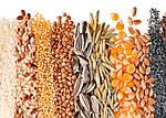 Сроки хранения и прорастания семян овощей (таблица)
