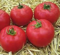 РОЗОВЫЙ томат индетерминантный АФЕН F1, 1000 сем