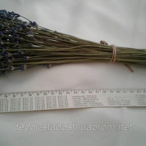Сухоцвет лаванда (100веток)