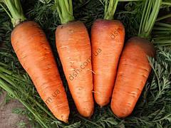 Морква Болтекс 10г (Clause) ТМ Добрі Сходи