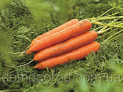 Морква Колтан F1 400шт (Nunhems) ТМ Добрі Сходи