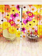 Фотоштора Walldeco Разноцветные ромашки (7762a_1_1)