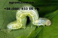 Инсектицид Актара, 40 г
