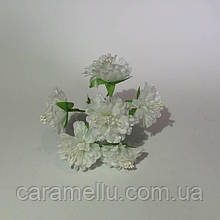 Хризантема 6 штук. Цвет белый