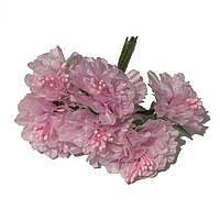 Хризантема 6 штук. Цвет розовый, фото 1