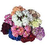 Хризантема пушистая 6 штук. Цвет бордовый, фото 3