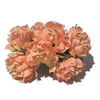 Хризантема пушистая 6 штук. Цвет лососевый, фото 1