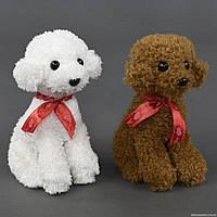 "Мягкая игрушка ""Собачка"" С 22813 (120) 2 цвета, 25см"