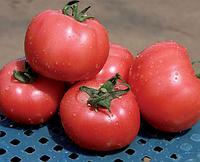 Семена томата Грифон F1 500 семян Nunhems