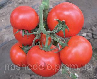 Семена томата Аксай F1 500 семян Nunhems