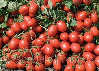 Семена томата Адванс F1 25000 семян Nunhems