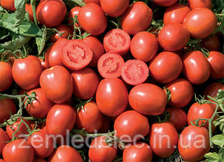 Семена томата Вулкан F1 5000 семян Nunhems