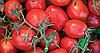 Семена томата Фоккер F1 25000 семян Nunhems
