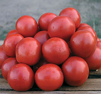 Семена томата Солероссо F1 1000 семян Nunhems