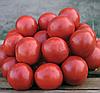 Семена томата Солероссо F1 25000 семян Nunhems