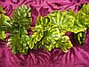 Лиана с листьями резными
