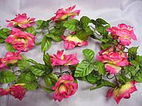 Цепочка чайных роз