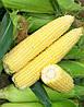 Семена кукуруза Сигнет F1 5000 сем. Семинис.