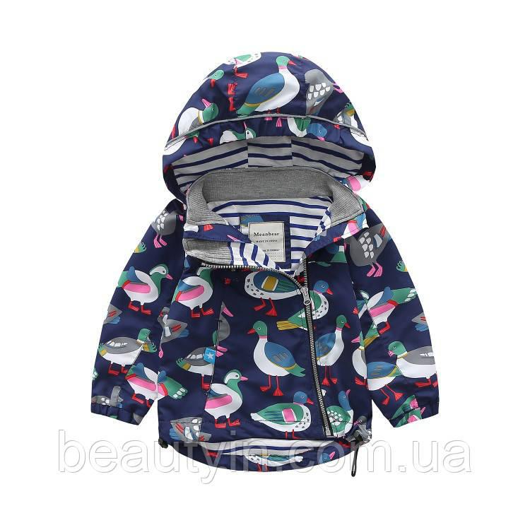 Детская куртка Птица Meanbear