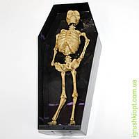 Скелет в пластиковой коробке-гроб, светится, издает звуки