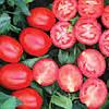 Семена томата Фузер 1000 сем.Семинис.