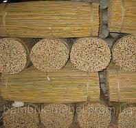 Тонкийский бамбуковый ствол (для подвязки растений ) диаметр 12-14мм длина 1,5м.