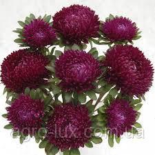 Семена астры Балун ярко-карминовая, 1 г  Satimex