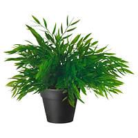 ФЕЙКА Искусственное растение в горшке, комнатный бамбук, 28 см, 90055093, IKEA, ИКЕА, FEJKA