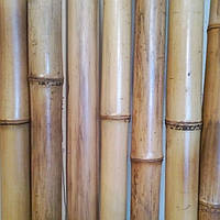 Бамбуковый  ствол натуральный (диаметр 30х40мм, длина 3 м.)