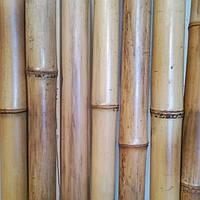 Бамбуковый  ствол натуральный (диаметр 40х50 мм, длина 3 м.)