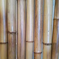 Бамбуковый  ствол  натуральный (диаметр 50х60 мм, длина 3 м.)