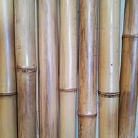 Бамбуковый  ствол натуральный (диаметр 60 х70мм, длина 3 м.)