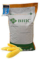 Насіння  кукурудзи Амарок 290 (ФАО 320) /ВНІС/ Семена кукурузы Амарок 290