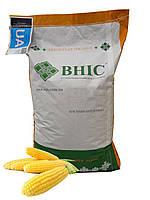 Насіння гібриду кукурудзи Гран1(ФАО 370) /ВНІС/ Семена кукурузы Гран 1