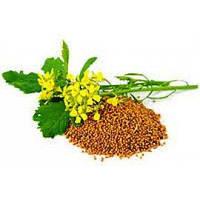 Семена Горчица желтая (медонос), 1кг