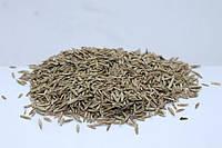 Семена Трава Райграс сенокосный многолетний посевной,1кг