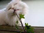 Комнатные растения могут быть опасны для домашних животных