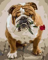 """Картина по номерам """"Английский бульдог с розой"""" набор для Рисования"""