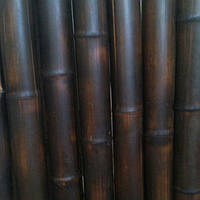 Бамбуковый ствол обожженый (шоколад) диаметр 3-4см. длина 3м.