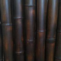 Бамбуковый ствол обожженый (шоколад )диаметр 22-24мм. длина 2,95см