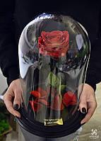 Роза в колбе , фото 1