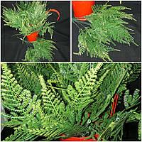 Роскошные листья папоротника для интерьера, пластик, выс. 37 см., 30/25 (цена за 1 букет + 5 гр.)