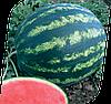 Семена арбуза Бонта F1 1000 семян Seminis