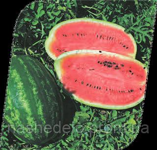 Семена арбуза Мелания F1 1000 семян Seminis