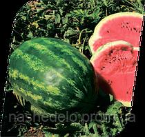 Семена арбуза Колизей F1 1000 семян Seminis